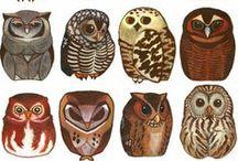 Owlies / by Leah Barton