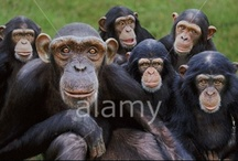 Wildlife / by Alamy