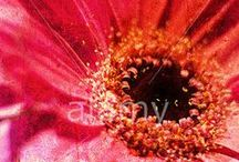 Flowers, Gardens & Plants / by Alamy