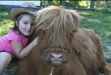 Events and Visits / Bringing Miles Smith Farm to you. Our cattle get around.