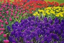 Flowers & Gardens ♥