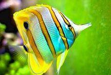 Sea Life ♥