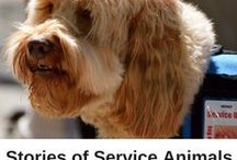 Inspirational Pets / Whether they performed heroic acts, survived terrifying ordeals or just defy the odds by being their amazing selves, these pets offer us plenty of inspiration! / by ASPCA Pet Health Insurance