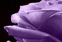 Roses...smell so good ♥