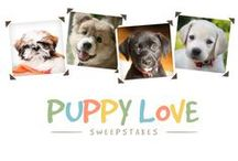 Furry Fun Chances to Win! / Enter our periodic sweepstakes for your chance win a prize / by ASPCA Pet Health Insurance