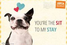 Valentine's Day Whisker-grams! / Spread the love, share a Whisker-gram. / by ASPCA Pet Health Insurance