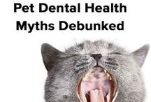 Pet Dental Care / Don't turn your nose to your pet's bad breath! Bad odor might signify a serious health risk that can damage teeth, gums and internal organs too. / by ASPCA Pet Health Insurance