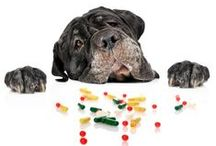Pet Poison Safety / Some of the biggest dangers to your pet are common, everyday things. / by ASPCA Pet Health Insurance