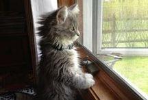 Cute Cats / by ASPCA Pet Health Insurance