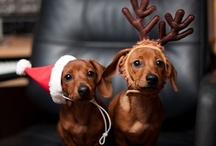 For the Love of Dachshunds (and other pets) / by Stephanie Cummings