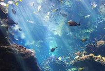 the ocean = life