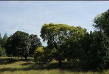 Awbury Scenery / by Awbury Arboretum