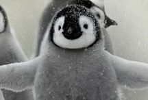 IMPORTANT: penguins. / They may not fly, but they sure can read.