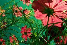 Flora / by Mandy Atkins