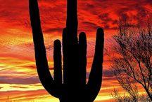Arizona / The place I grew up! / by April Smith
