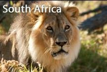 South Africa / Visit Durban's beach bars, Feel the bliss of a beautiful sunrise at Cape town & Meet 'The Big Five' & diverse fauna midst the wilderness of Kruger National Park