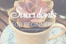 Succulent Creations