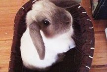 For the Love of Rabbits / It's no secret that these are my all time favorite animal.  I think they are sweet, loving, and humorous.