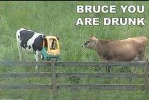 Funny!!! / Chortle. / by Brianna Carson