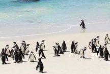 Penguins / by Ingrid London