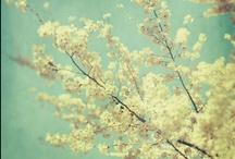 seasonal / by Mollie Lynn