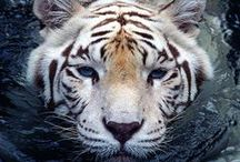 Wildlife Beauty