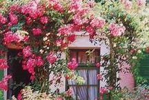 color! / by Catie Daniel