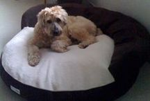 Nature's Sleep Dog Beds Love / Can you handle the cuteness? Nature's Sleep loves our puppy customers!
