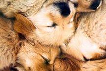 pups / by Miranda Daly