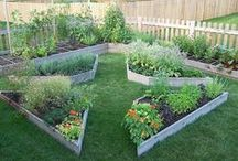 A - Raised Beds and Cutting Garden / by Betsy Pedersen