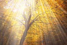 Beams of light / by Elissa Long