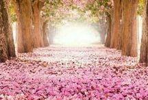 roze  kleuren