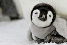 Cute creatures...  awww!