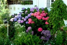 Porch/Yard/Garden / by Megan Jackson