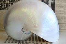 Customer's Favorite Shells / Amazing shells from the www.seashellsupply.com online store