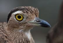 Aves del Zoo / ¿Sabías que Colombia es el país con mayor número de especies de aves en el mundo? Con sólo el 0.1 por ciento del territorio mundial, Colombia tiene cerca del 20% de las aves del planeta, con lo cúal se convierte en el paraíso para los pajareros, quienes pueden observar más de 1.876 especies en un sólo país.