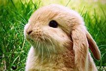 bunnies / konijntjes