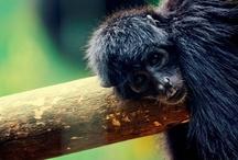 Monos del Zoo