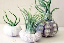 "DIY ""Green"" / Creative ways to garden and grow."