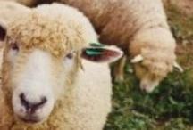 Yarn & Woolies / yarn and woolies