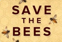 """mind your BEES wax! / I love honey, so I love bees. If we lose the bees, where will our food come from? (and please dont say"""" from Walmart"""".)"""