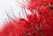 BOTANICS & Flora / FLORE & Botanique / Fleurs, arbres, graines, végétaux magnifiés par l'illustration ou la photographie / by mdboi
