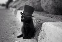 Cat Lady / by Jodi Price