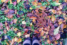 snap / taken by iPhone5 / by Sato Minako
