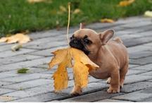 fall.. ya' all / by Judy Taylor