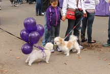 Pets Going Purple / by Alzheimer's Association, NYC Chapter