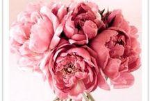 Indoor & outdoor plants & flowers / by Lyra Kelsey