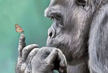 Fauna: Animals ツ / Animals.