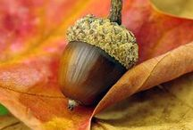 Autumn ♧ Fall Photography