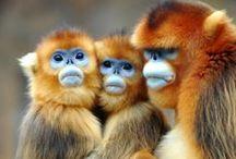 Monkeys / by Linda Langevin